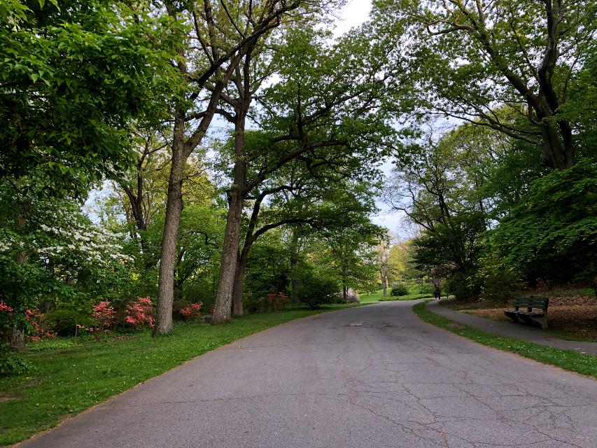 #freetoedit #spring #path #trail #park #bench