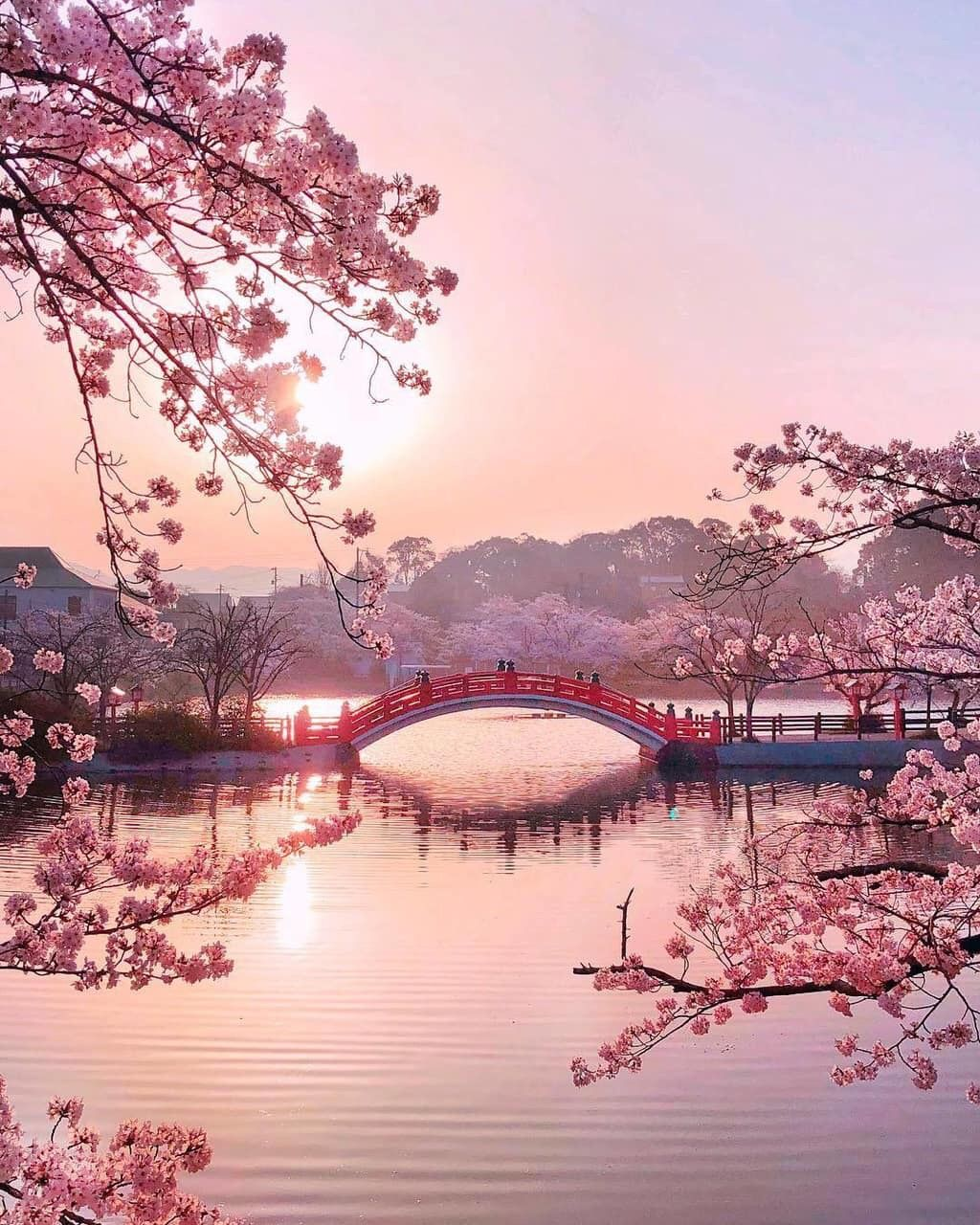 Freetoedit Aesthetictumblr Background Wallpaper Sakura