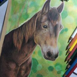 art drawing portrait horse nofilter