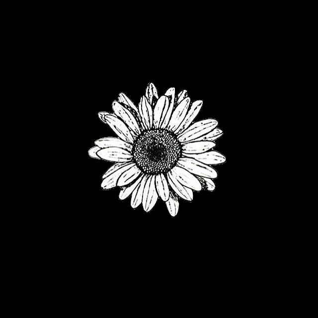 Background Black White Flower Cute Aesthetic