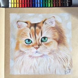 art drawing cat