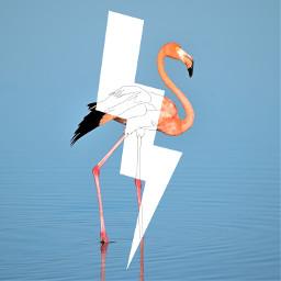 ircflamingo flamingo freetoedit lightening shape