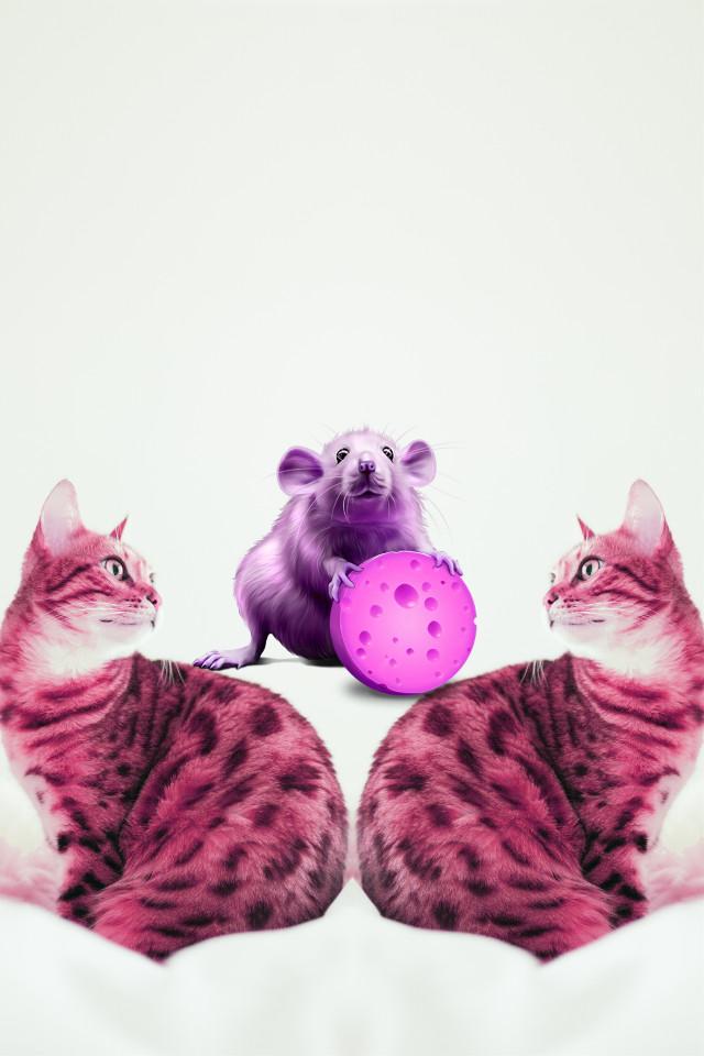 #freetoedit #dailyremix #dailyremixmechallenge #dailyremixchallange #cats #mouse #picsart
