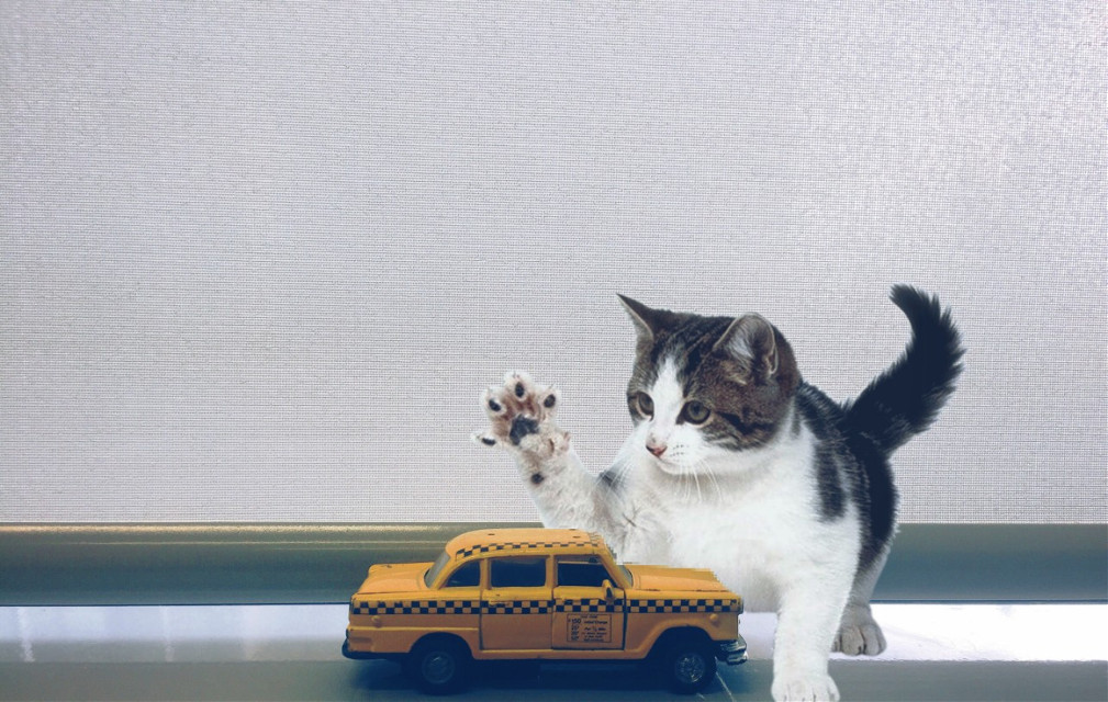 #freetoedit #cat #gigant #taxi #car