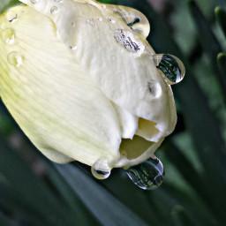 blossom dewdrop dew originalphoto myphoto