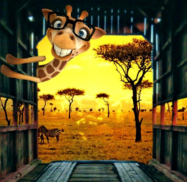 #freetoedit #giraffe #savanna #vipshoutout