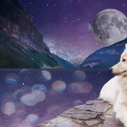freetoedit dog whitedog white space ircdog