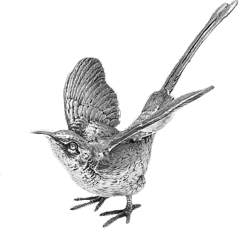 stickers sticker nature kolibri bird freetoedit