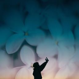 flower magichour sky blue bluesky