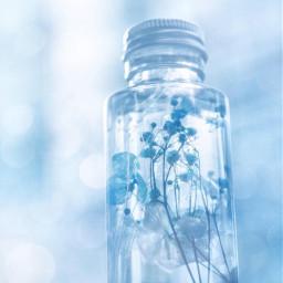 blue nature japan diy flower freetoedit
