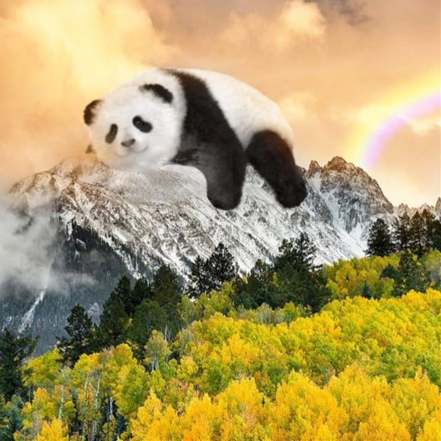 #freetoedit  Late #vipshoutout to @lil_avagyan 🎉 #panda #mountain #nature #rainbow #forest #lying #clouds #sky