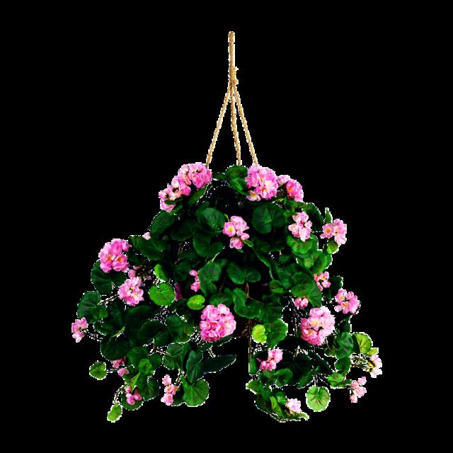 #hangingplant #plant #flowers #furniture @andygatoo30