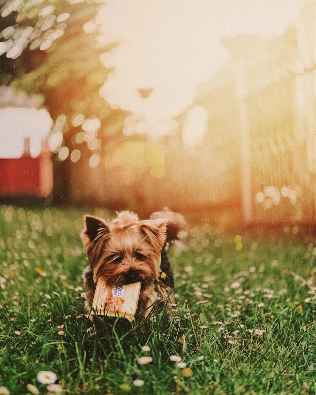#freetoedit #dog #beach #nature #animals #summer #photography #mobile #iphone #people #street #naturephotography