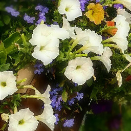 flowers photography travel glaciernationalpark montana pcmacro