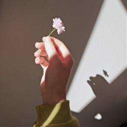 freetoedit softshadow soft whiterose pchands