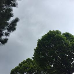 freetoedit tree clouds sky photography
