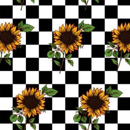 freetoedit sunflowers checkerboard wallpaper