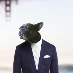 freetoedit fantasy cute dog pug