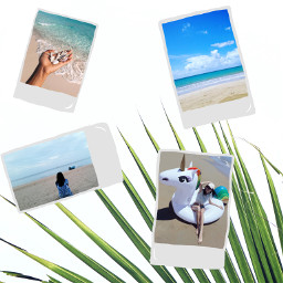freetoedit palmbranch pics poloroid beach