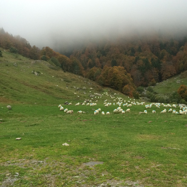 #freetoedit #photography #nature #mountains #forest #clouds #animals #sheep #pyrenees #travel