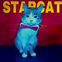 cat starcat starboy