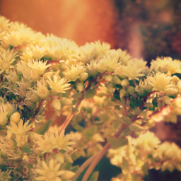 nature lateafternoon warmsunnylight suculentflowers naturesbeauty freetoedit