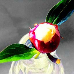 flower bud peony peonyflower peonybud