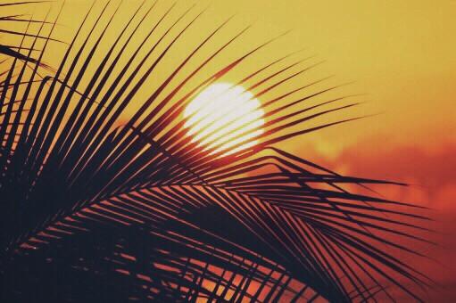 #nature #chasingsunsets #goldenhour #sunsettime #palmtreeleaves #silhouettes #contemplationmoments #beautifulscenery #goldenlight #naturesbeauty #peacefulandandquietmoments #summersunset #naturephotography #freetoedit