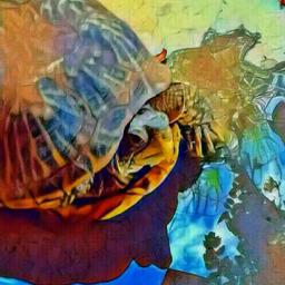 turtletime speedy mypet