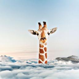 srcworldufoday worldufoday giraffa sky ufo freetoedit