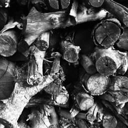 wood logs pile blackandwhite indiana