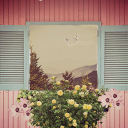 ircbabyblueshutters babyblueshutters freetoedit window windowsremix