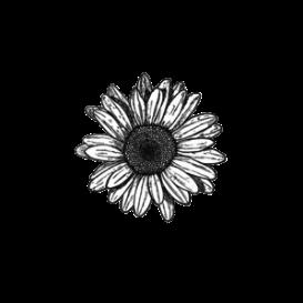 Tumblr Blackandwhite Flowers Flower Floral Ftestickers
