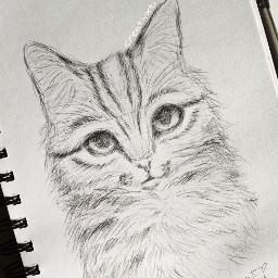art sketch cat graphite