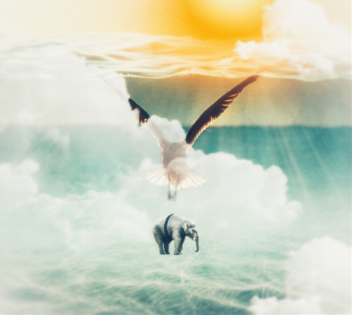 #freetoedit #vipshoutout to @mariechristine25 🙌  #bird #sea #water #sun #elephant #animal #clouds #light