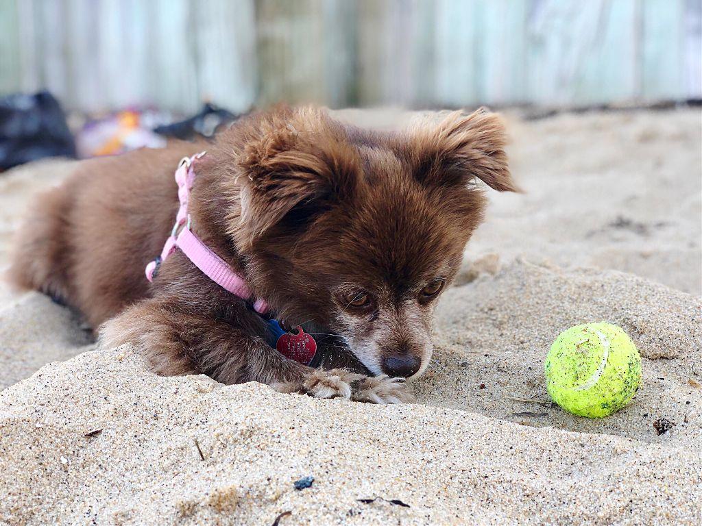 Freetoedit Happy Friday Cute Dog Love Beach Dogsofpi