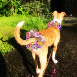 srcfridaflowercrown fridaflowercrown freetoedit honey