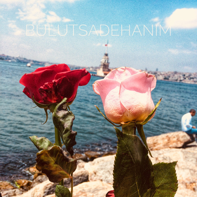 #istanbul #istanbulcity #istanbulturkey #istanbullove #istanbulda1yer #istanbulboğazı #rose #roses #flower #flowers