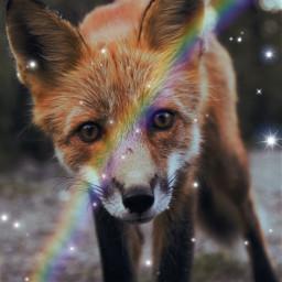 foxy animalloversart love savethemall freetoedit