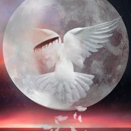 freetoedit whitemoon dove wings mysticker srcwhitemoon
