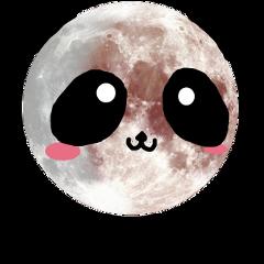 panda kawaii cute moon luna freetoedit