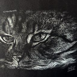 art drawing notasgood cat blackpaper