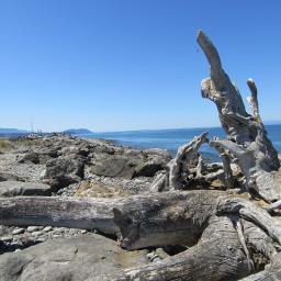 driftwood rockybeach freetoedit