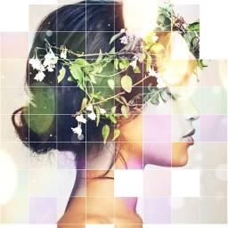 crownflower model flower beauty freetoedit