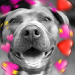 freetoedit remix dog mondaymornings