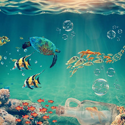 unterwasser sea fish turtle freetoedit