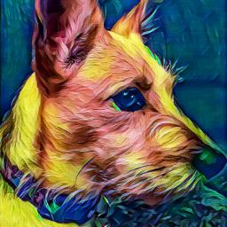 nova mydog