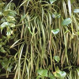 freetoedit leafy green greenleafbackground plant