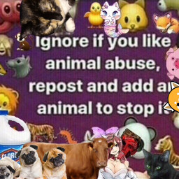 freetoedit dedication animalabuseawareness pugs animals