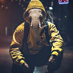 freetoedit humananimalhybrid elephant elefante animals